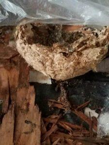 a bee hive on a basement