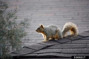 a squirrel on the rooftop