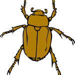 icon of a stink bug