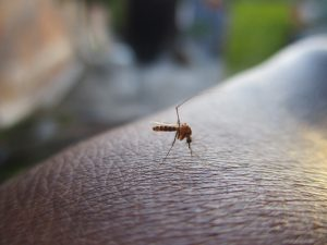 Mosquito Facts: All About Mosquitoes You Should Know, Rest Easy Pest Control