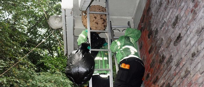 Rest Easy Pest Control's exterminators removing a wasp nest in Nassau County