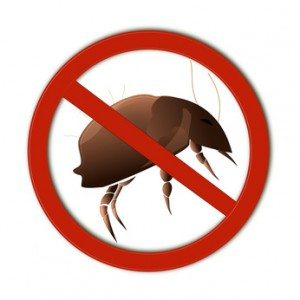 Pest Extermination Services, Why Are Year Round Pest Extermination Services Essential?