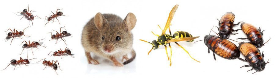 different types of pests: ants, mouse, wasp, cockroaches