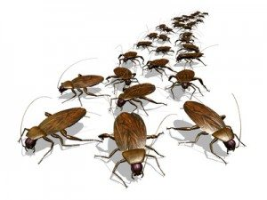 Where Do Roaches Come From? True Stories of Roach Invasion