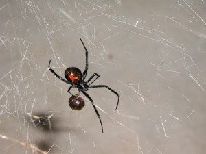 4 Fun Facts About NYC & Long Island Spiders, Rest Easy Pest Control