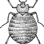 illustration of a bed bug