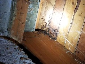 ants swarming on the wood ceiling