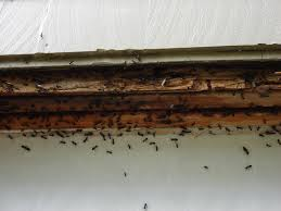 ants swarming around their nest on the wall