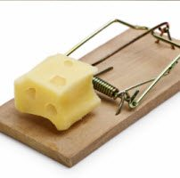 mouse trap with cheese