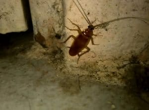 a cockroach is scurrying on a basement wall