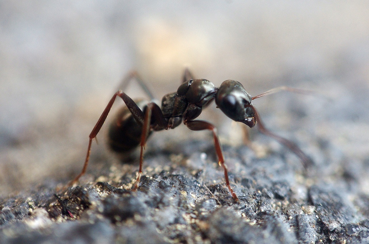 a black ant on the stony ground