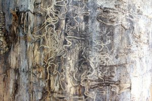 termites on a tree