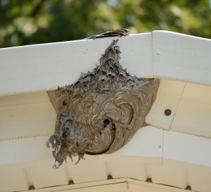 bee hive on top of a house porch