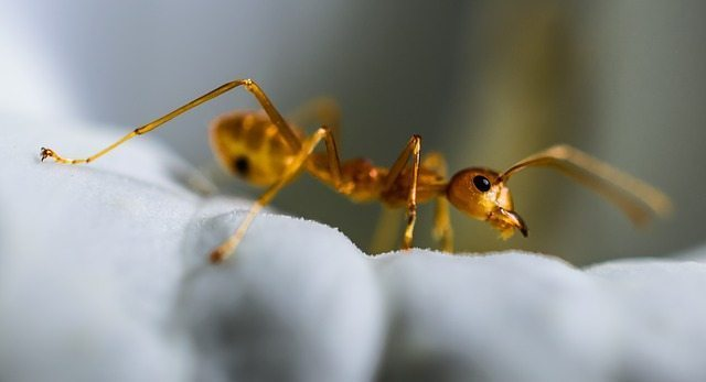 an ant scurrying on a mattress