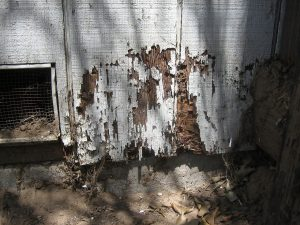 termite damage at a long island home inspected and treated by rest easy pest control