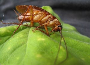 cockroach on a leaf