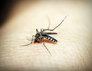 a mosquito is biting a human's body