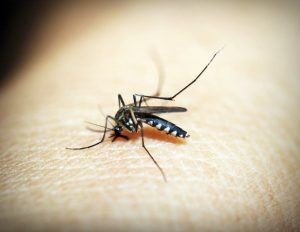 Summer Pests: Top 3 Most Harmful Pests to Avoid This Summer