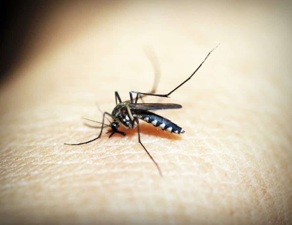 a mosquito is biting someone's body