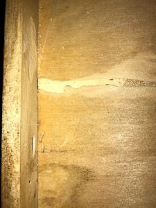 drywood termites on wooden structure
