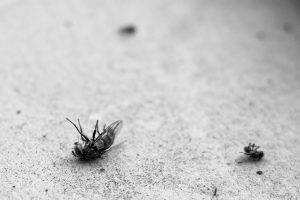 dead flies on the ground