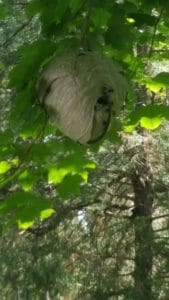 a bee hive on tree