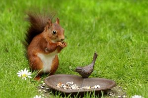 a squirrel eating food on the grass