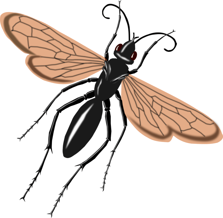 tarantula hawk icon