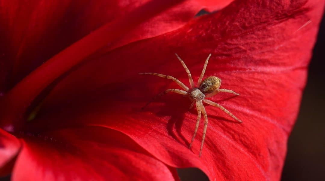 Have A Spider Bite? Signs and Threats of the Harmful Spider Bites