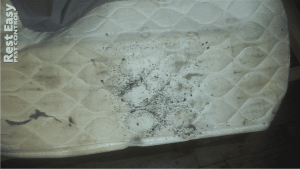 bed bug fecal stain on mattress