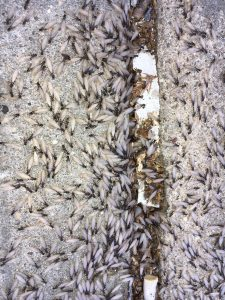termites swarming in front of a house