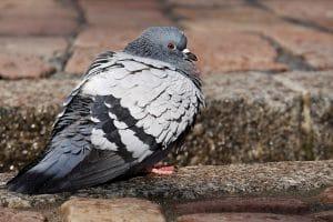 residential bird control long island ny