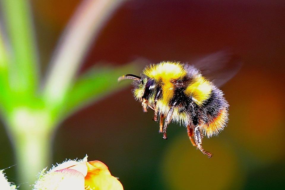 a bee near a flower