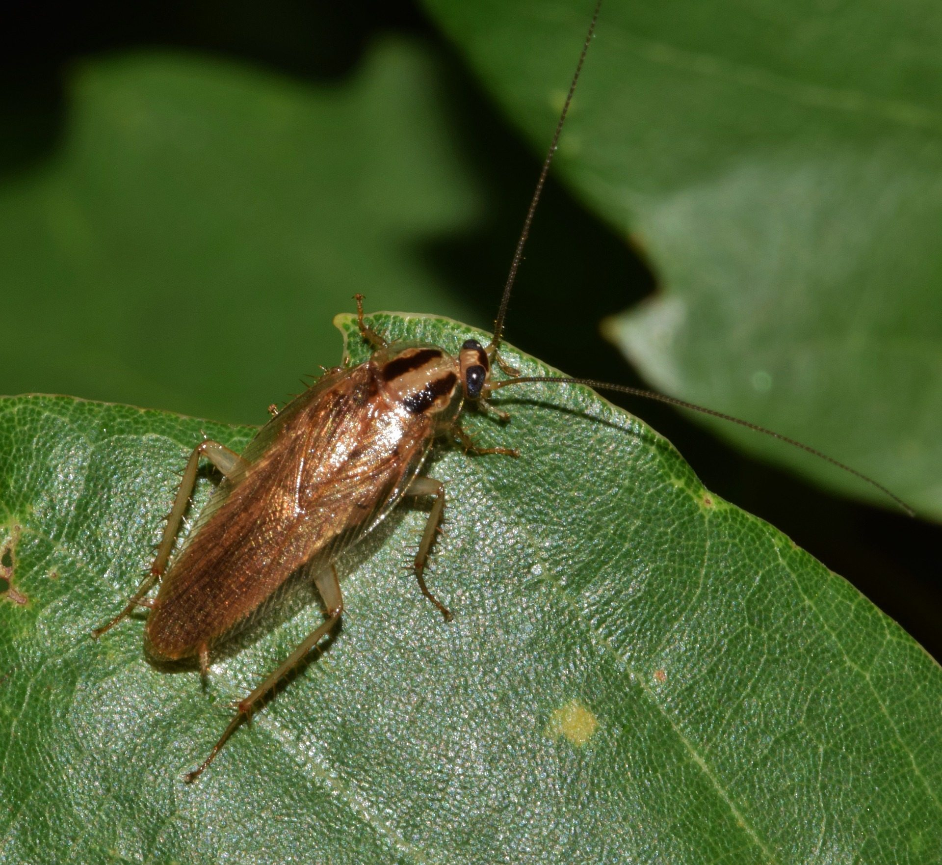 a cockroach on a leaf