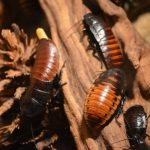 cockroaches on the wood