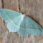 green moth on a wooden table
