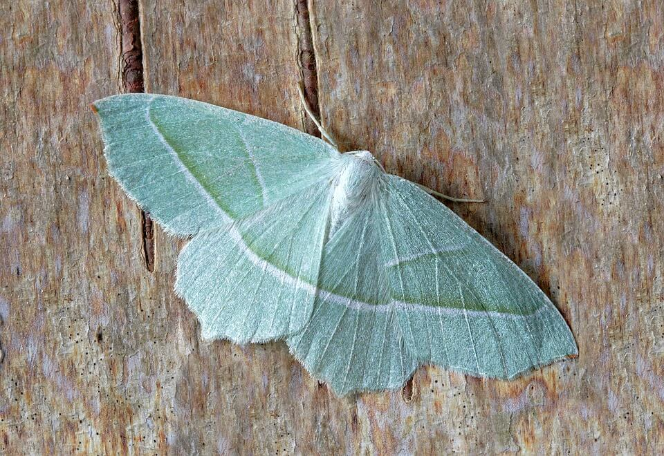green moth on wooden table