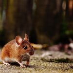 a mouse scurrying on the ground