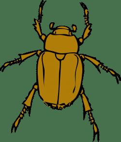 stink bug icon