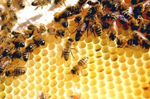 Bees and Wasps Facts: Watch Out! These Colors Will Make Them