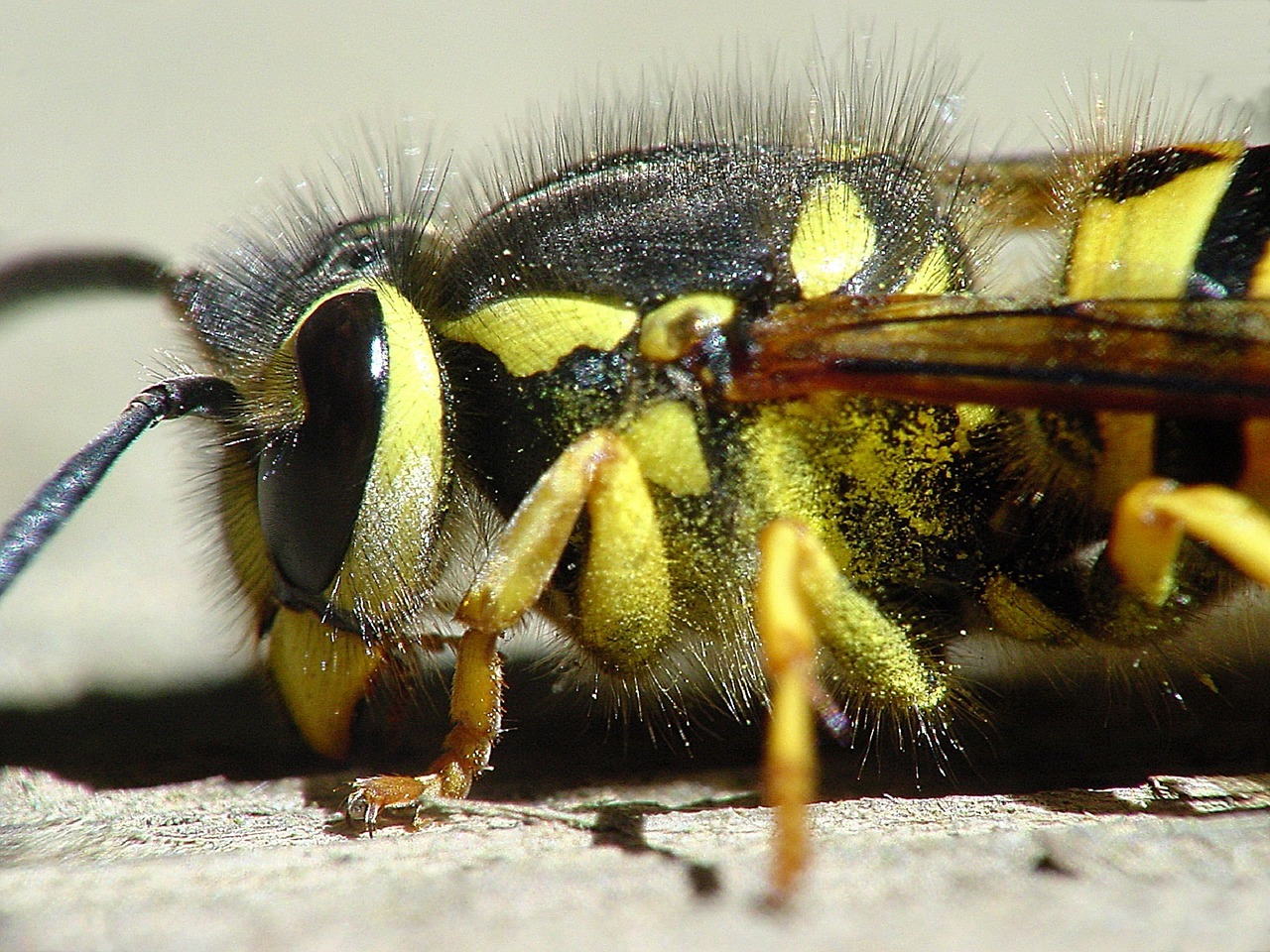 a wasp on the ground