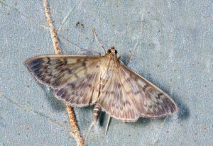 moth on the floor