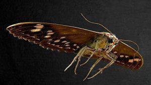 a moth on dark background