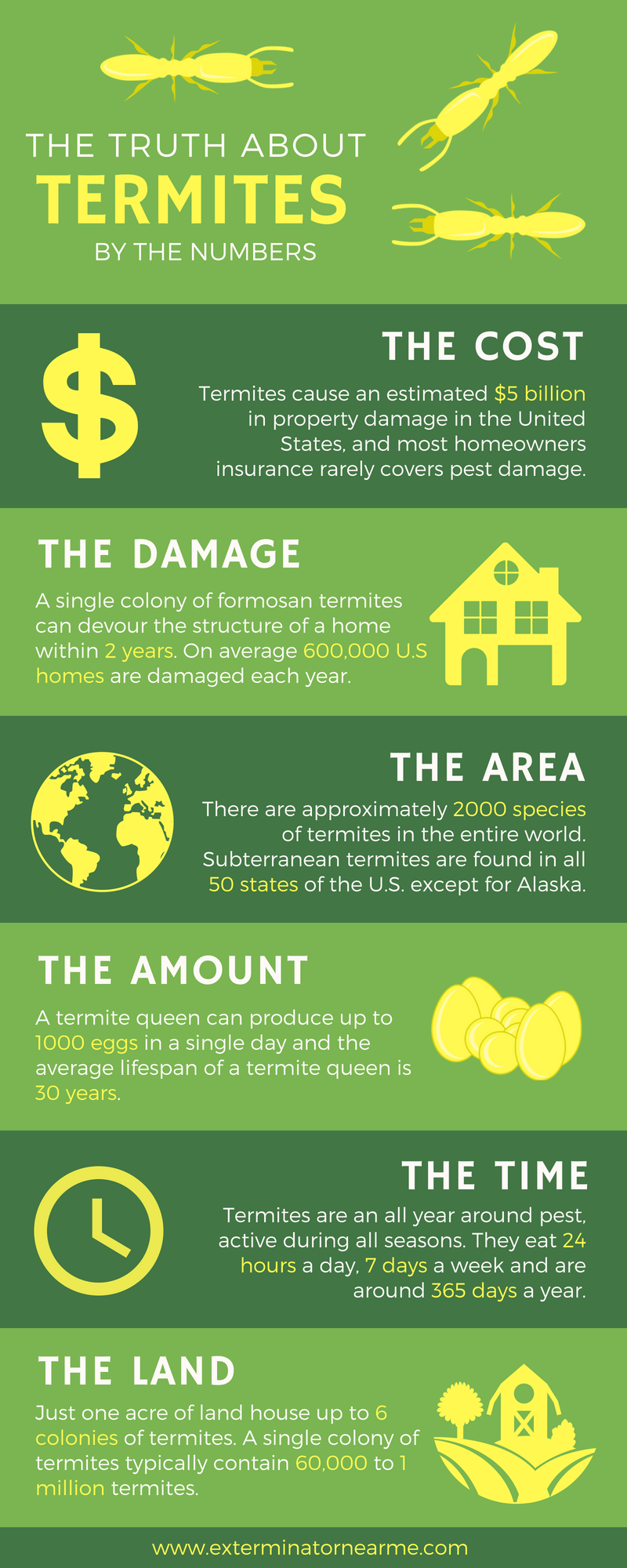 Truth About Termites (Infographic)
