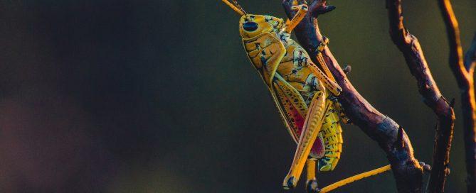 cricket on tree branch