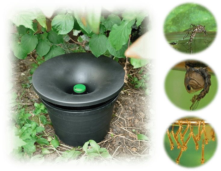 in2care mosquito trap